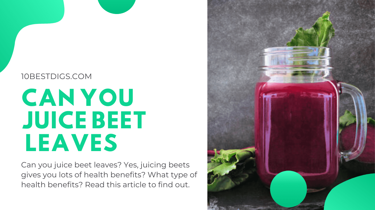 Can you juice beet leaves
