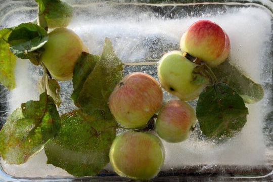 apples with ice cube